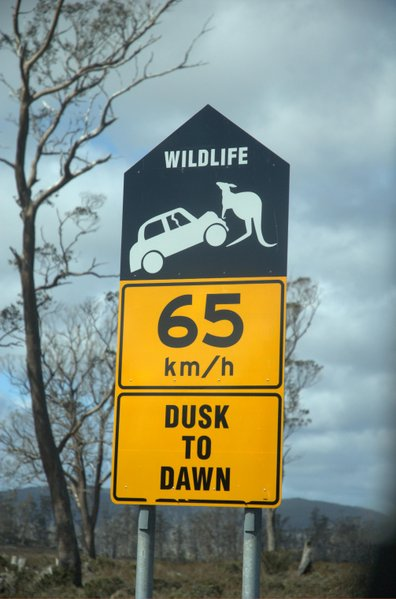 397px-Kangaroo-sign-in-Tasmania.jpg